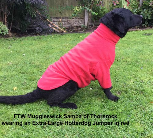 Hotter Dog Fleece Jumper: Bright Red